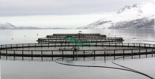 Садки для разведения рыбы плавающие