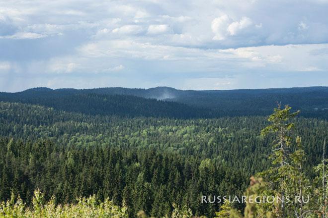 Еловый лес, Карелия