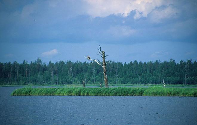 Озеро Водлозеро Республика Карелия